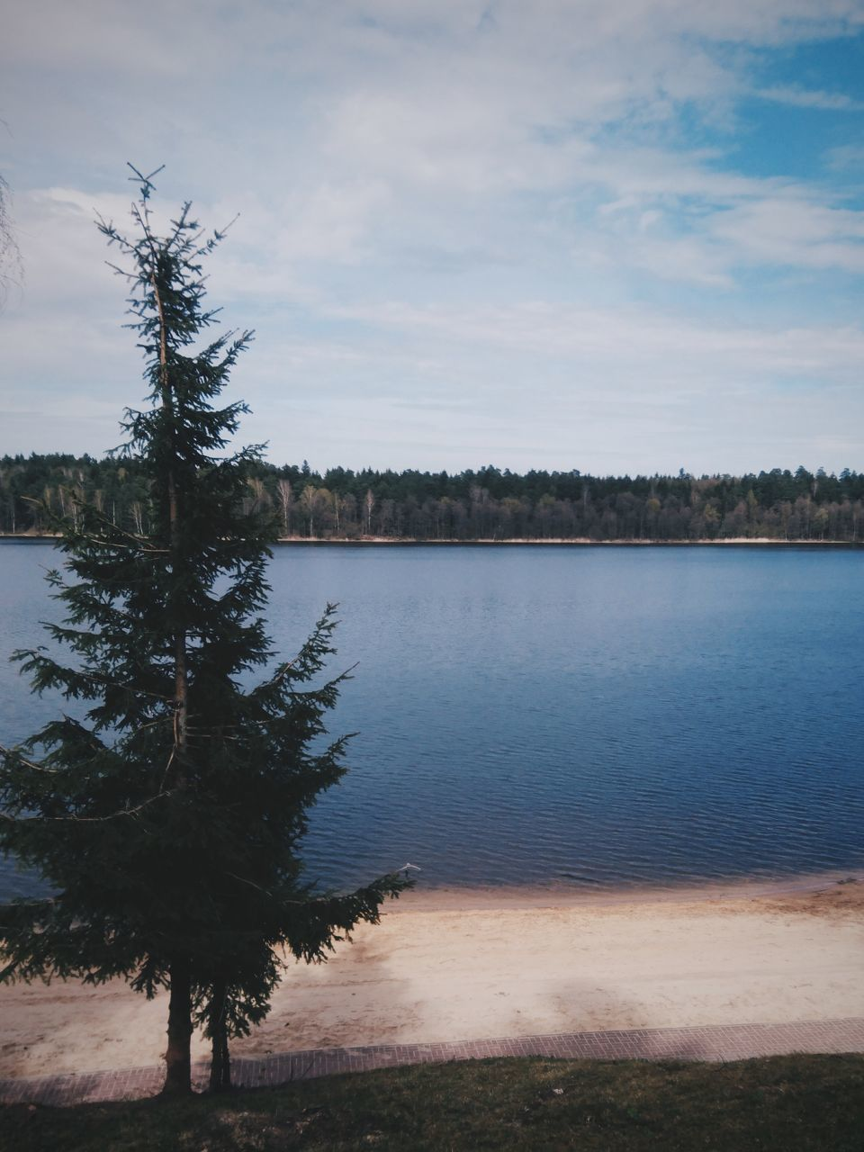 tree, scenics, water, sky, tranquil scene, tranquility, nature, lake, beauty in nature, cloud - sky, outdoors, no people, landscape, day, growth