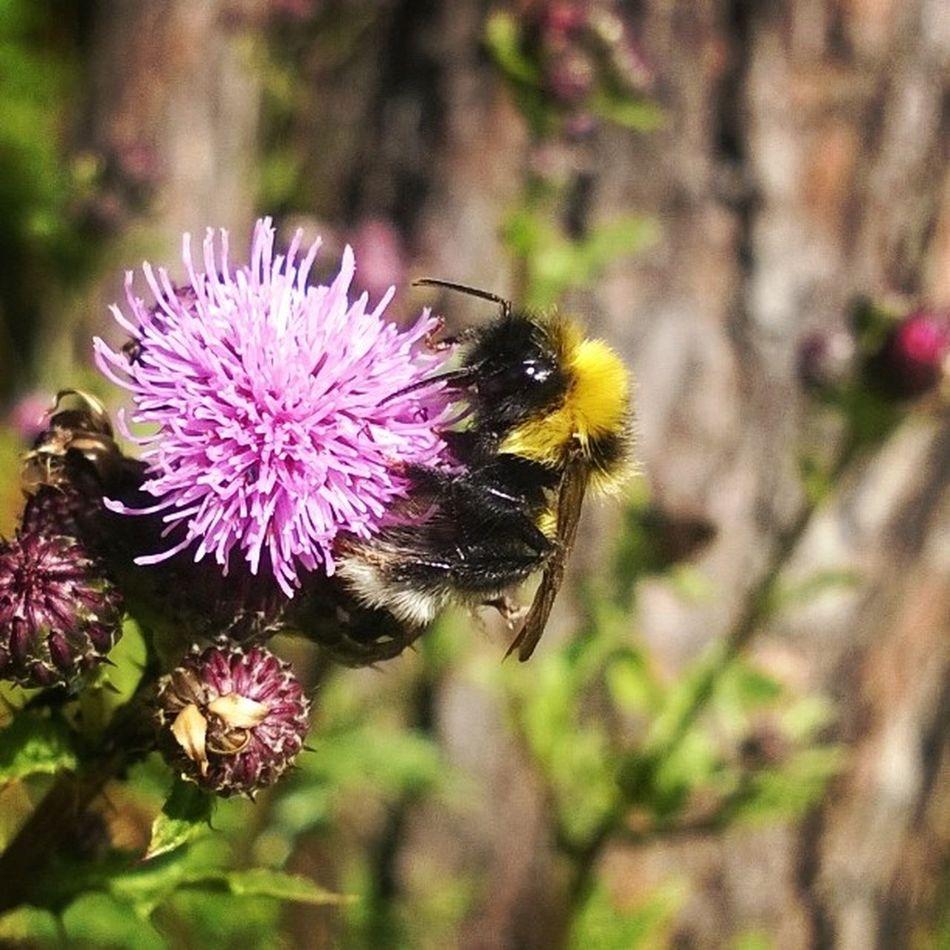 Summer Bee Lumia920 L920