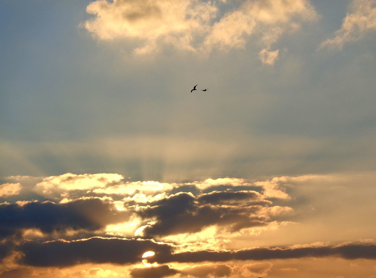 Cork Sunsets 01 Sunset Cloud - Sky Nature Sky Ireland Seagulls Tranquility Glory Golden