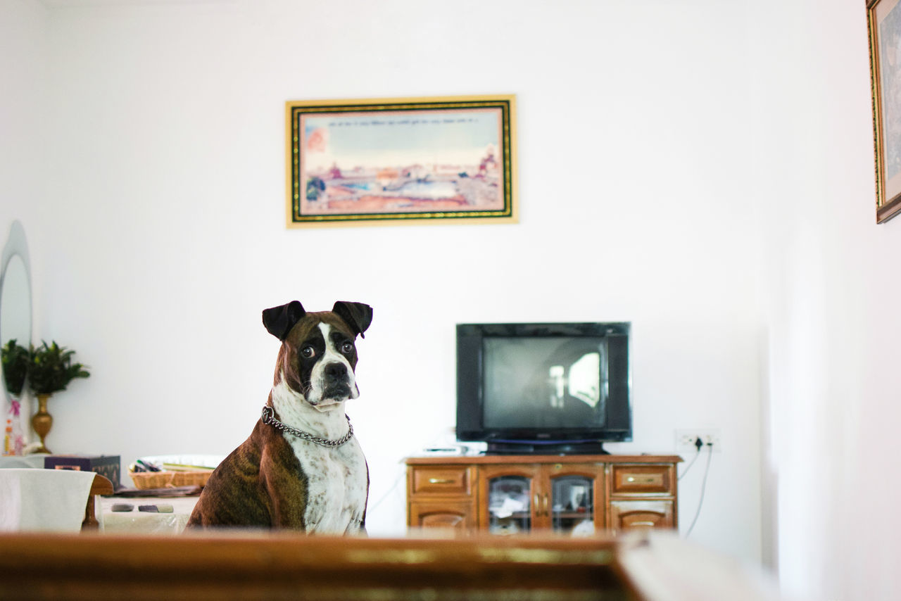 🐶👀🌄☕ InMakin! Boxer Dogs Pet Indoors  Paintings Art And Craft Picture Frame Home Interior Living Room My Unique Style Popular Photos Pet Photography  Cute Pets Dog Randomness Perspective Place Of Heart