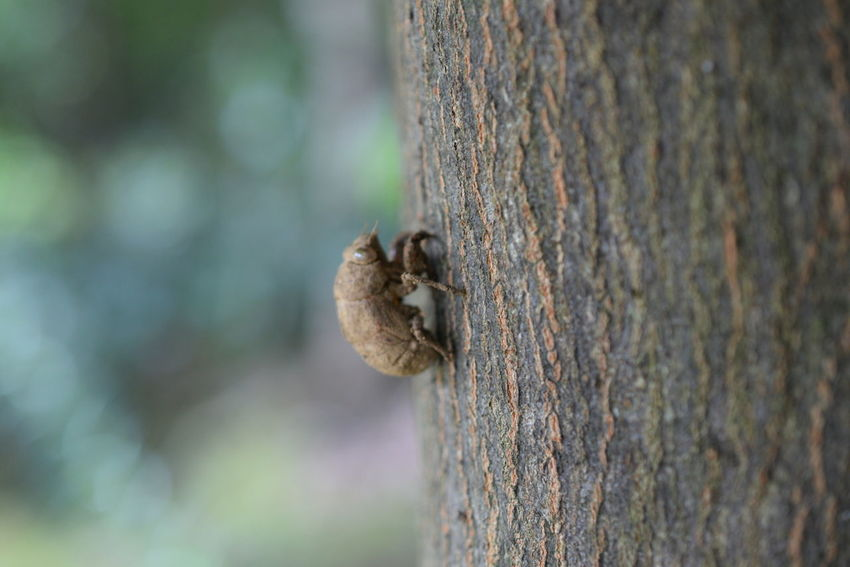 Husk Of Cicada Close-up Day Focus On Foreground Fungus Nature No People Outdoors Tree Tree Trunk