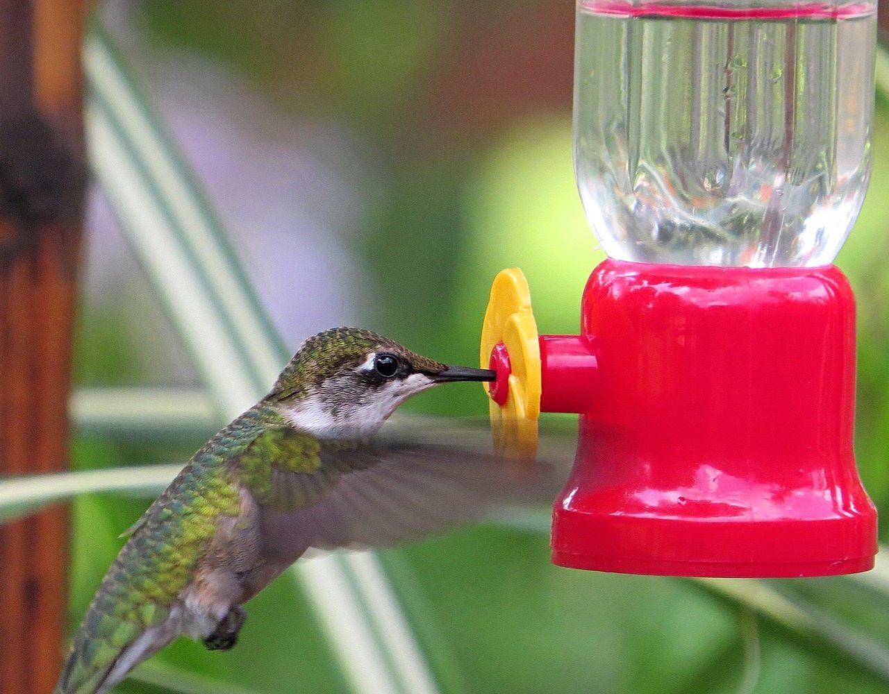 Beautiful stock photos of hummingbird, Animal, Animal Themes, Avian, Bird