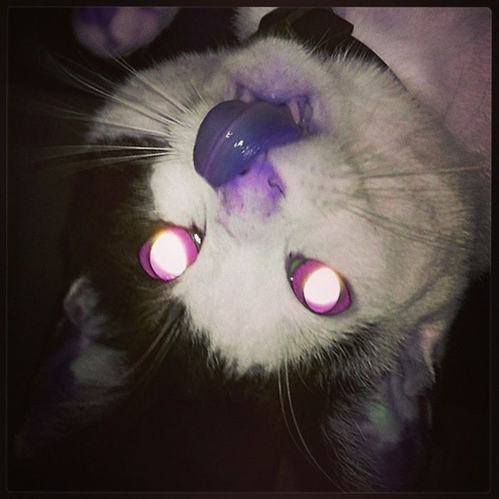 Evil Dead Upside Down Cat Instacat Evildead Upsidedown