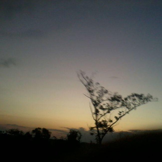 [ senja ] Sunset Waykanan Lampung INDONESIA asia nature instanusantara instanusantaranature kamerahpgw tree trees