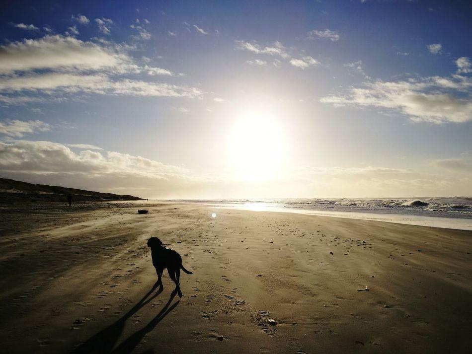 Beach Sand Sea Outdoors Sky Vacations Landscape Silhouette Horizon Over Water Sunlight Sun Day Dog Dogs Of EyeEm Danmark