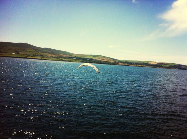 Kerry Ireland, Dingle Bay Ireland Beautiful