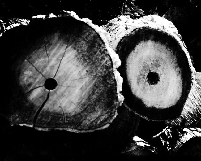 occhi Tree Natural Beauty Nature_collection Hipstamatic Minimalism Minimalist Photography  Minimal Minimalist Naturelovers Nature Nature Love Nature Photography Popular Photos Bnw_collection Blackandwhitephotography Blackandwhite Photography Bnwphotography Blackandwhite Bnw_captures Black And White