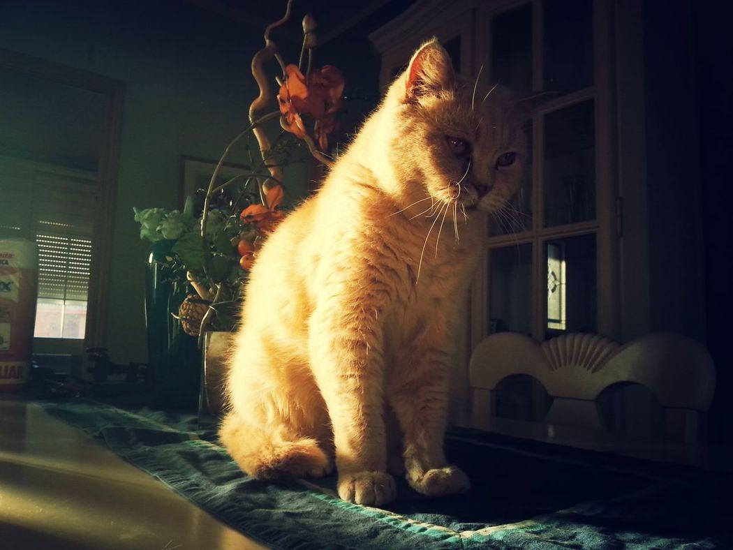 Nala shoot Catoftheday Cats 🐱