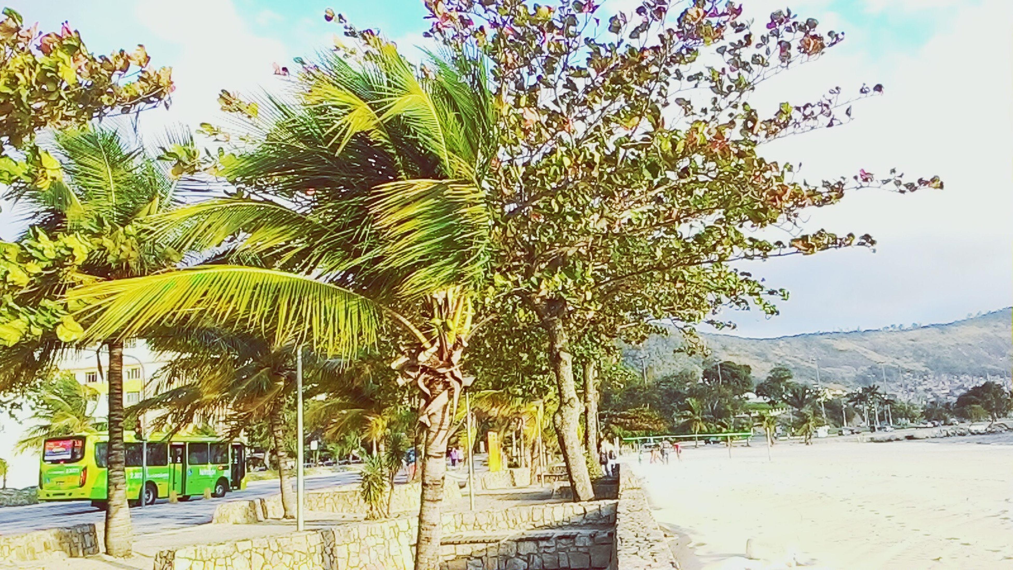 Charitas Niterói Natural Guiadeniteroi SãoFrancisco Nature Beach Thecoconutitree
