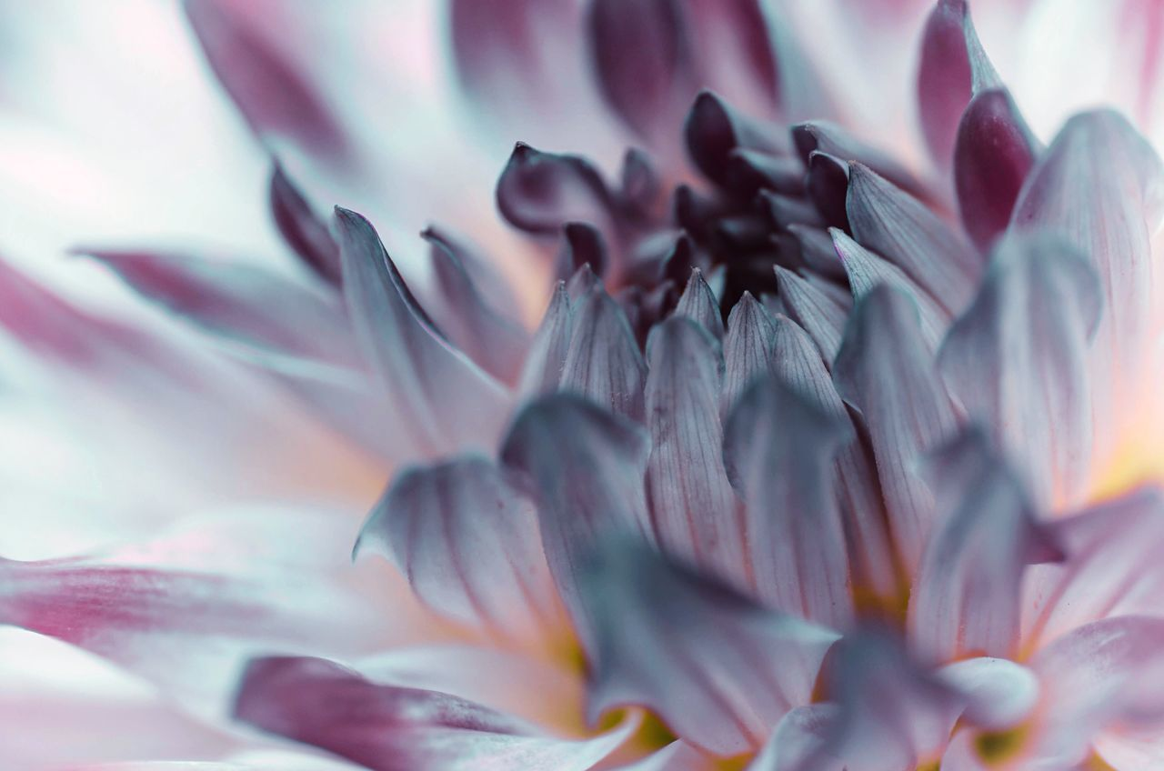 Beautiful stock photos of background, Backgrounds, Beauty In Nature, Bloom, Detail