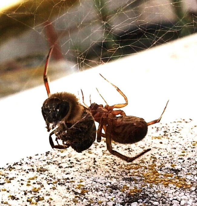 Hello World Taking Photos Check This Out Hanging Out Nature Photography Open Edit For Everyone Estepona Spinne Und Biene Smartphone Photography National Geographic Insect Photography Hanging Out