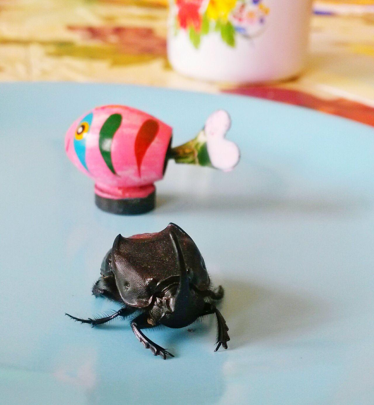 Escarabajo Safuca