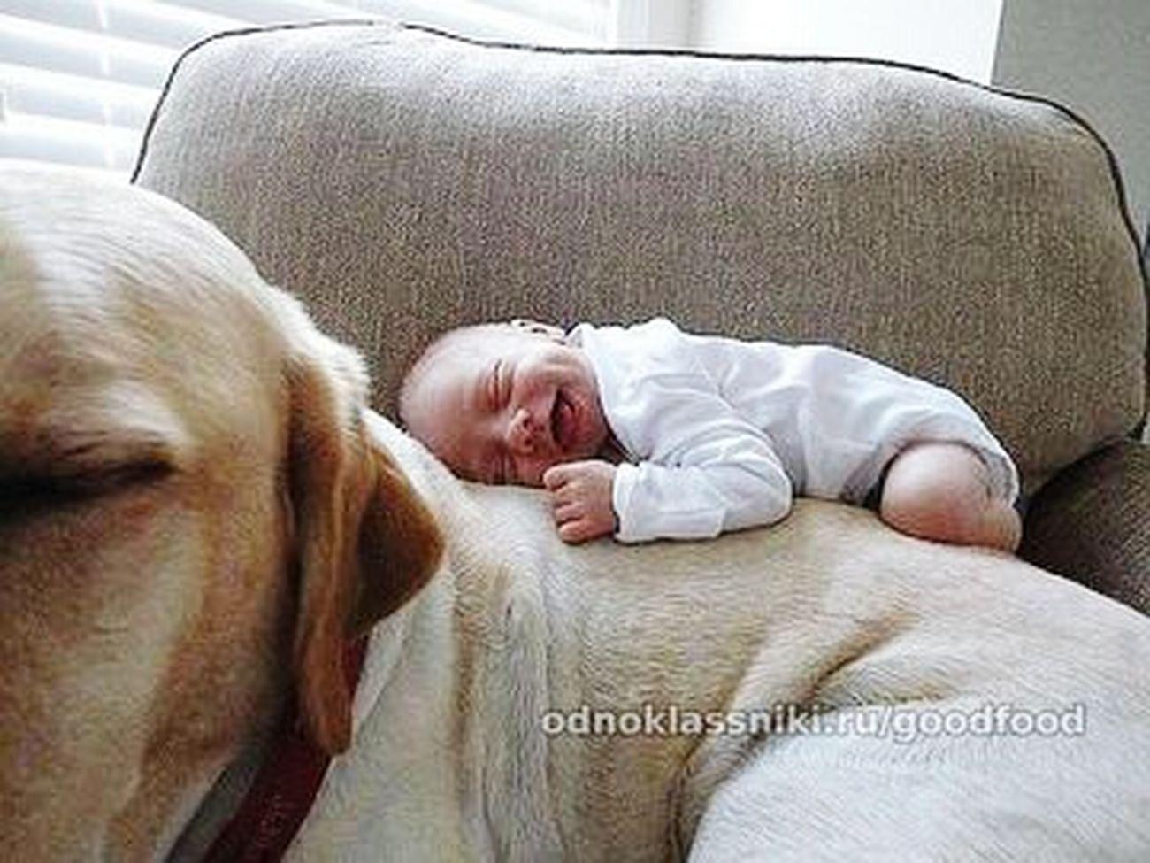 Малыш)) на собаке