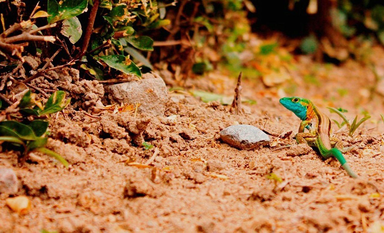 Cautela Nature Photography