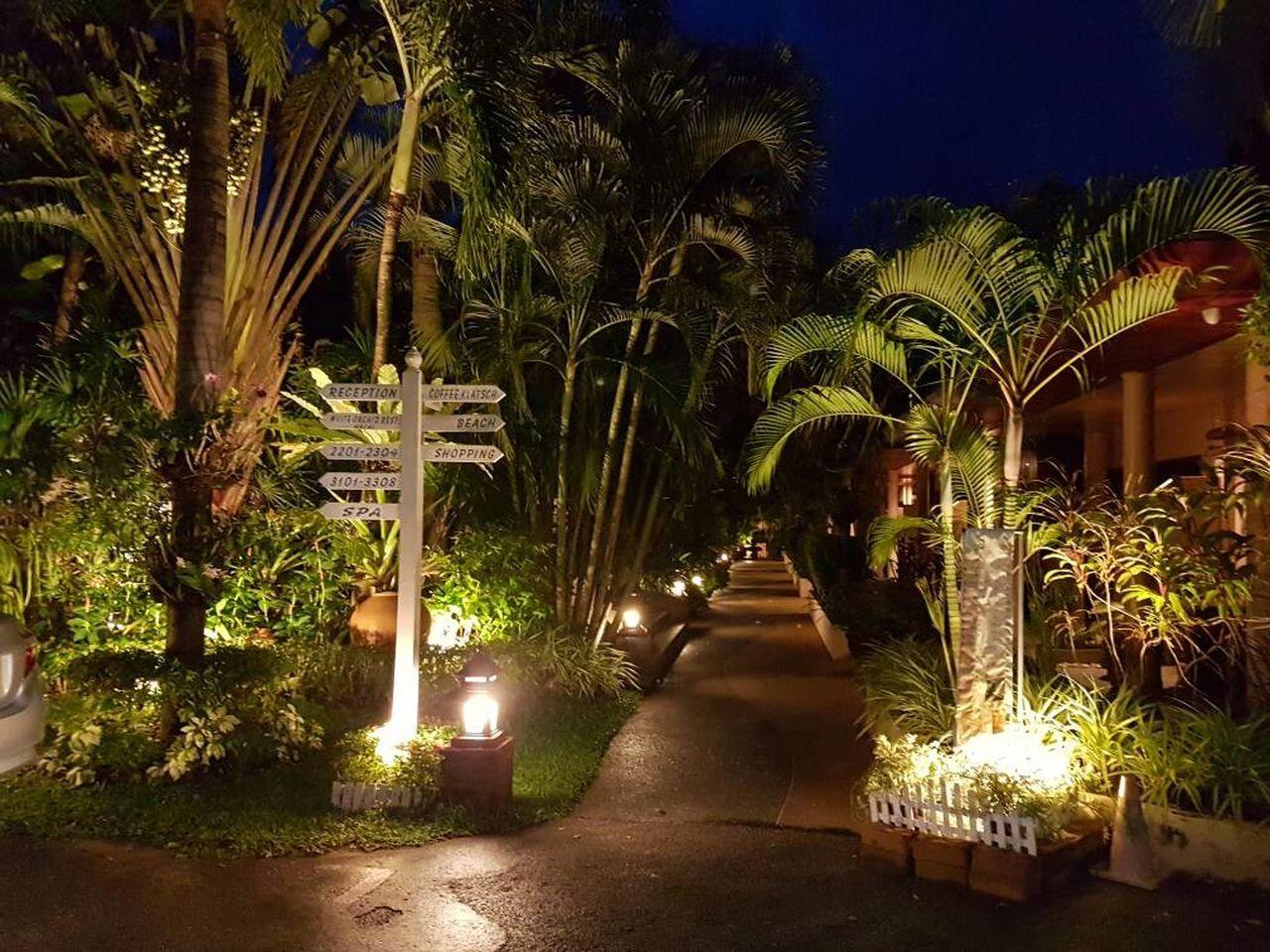 night, palm tree, illuminated, tree, plant, no people, growth, luxury, nature, outdoors, sky