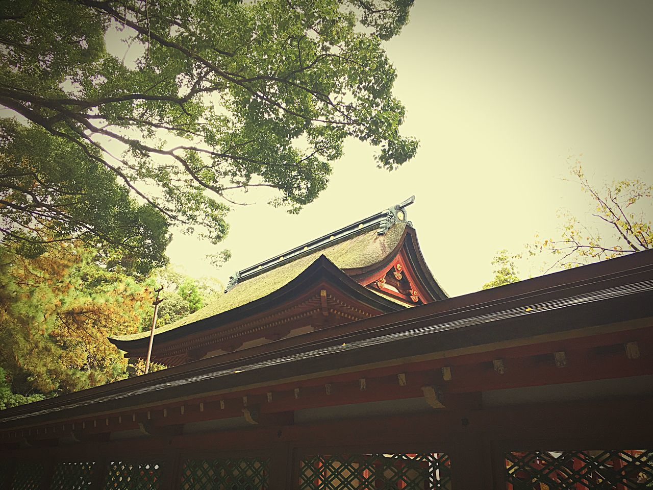 香椎宮5〜 Japanese Shrine Architecture Building Exterior Low Angle View Tree Tradition Trees And Sky Shrine Of Japan Shrine TreePorn Tree_collection  Eyeemphotography Beauty In Nature Fukuoka,Japan