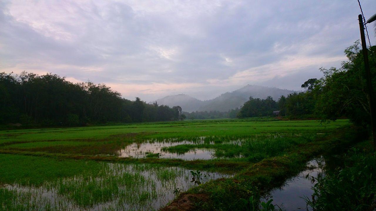 Beautiful stock photos of sunrise, Field, Jitra, Malaysia, Nature