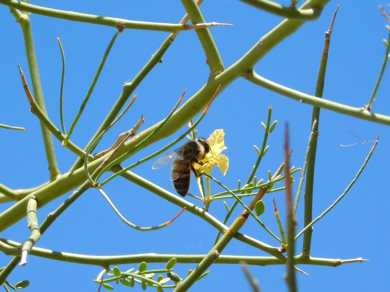 Bee Animal Wildlife Animals In The Wild Blue Outdoors No People Day Bird Sky Tree Nature Animal Themes Perching Close-up