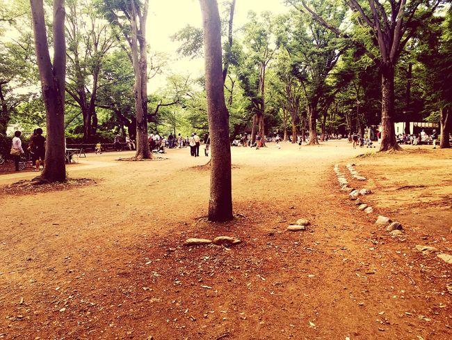 井の頭公園 Tokyo,Japan Inogashira Park Hibana
