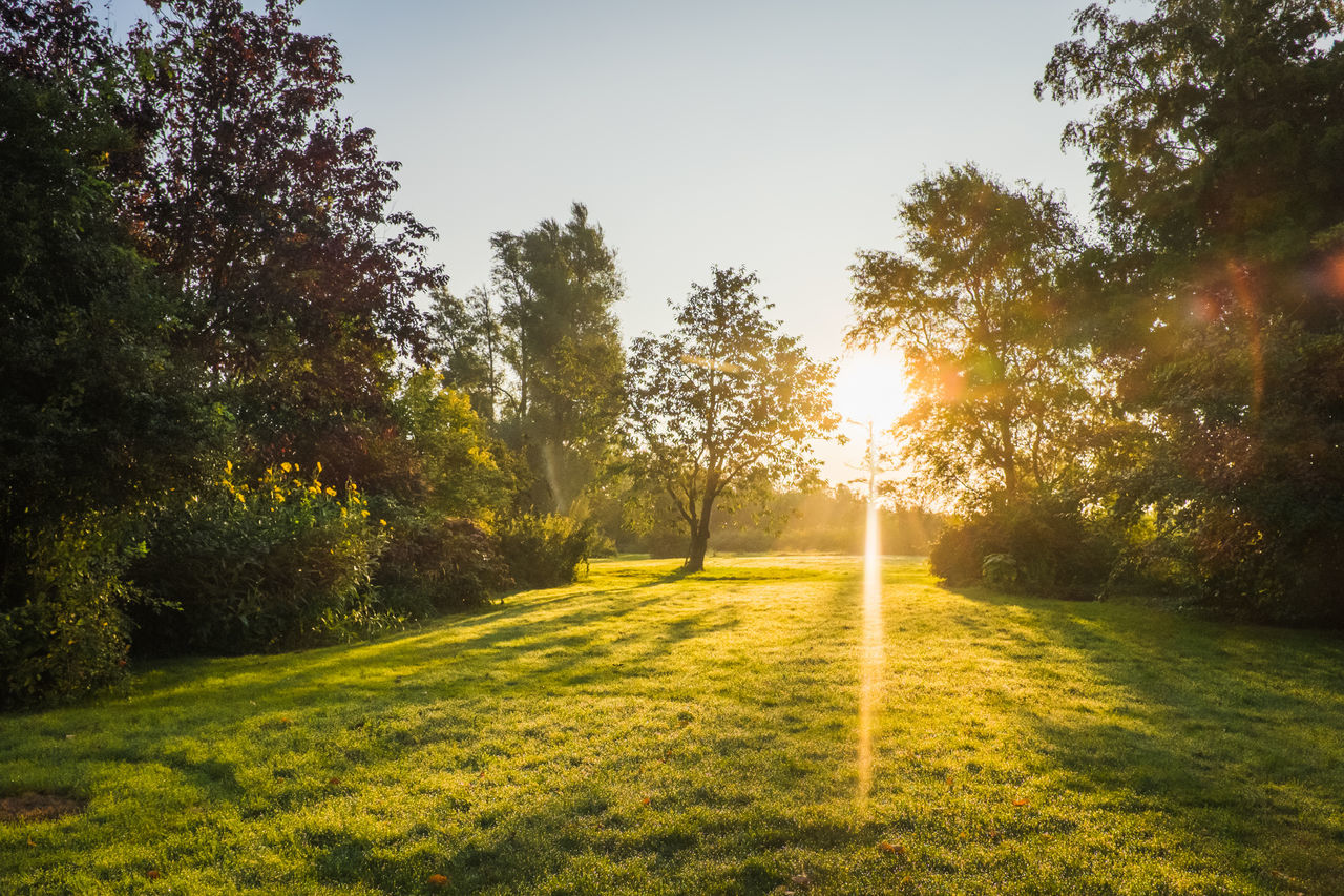 Sunbeam Seen Through Trees On Field Against Sky During Sunrise