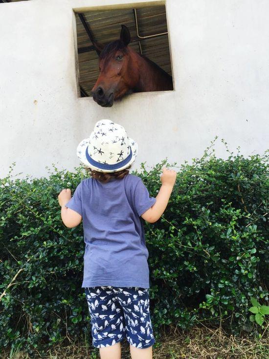 Babyboy Baby Jettsiraberg Toddler  Children Kidandhorse Animal Horse Horsie