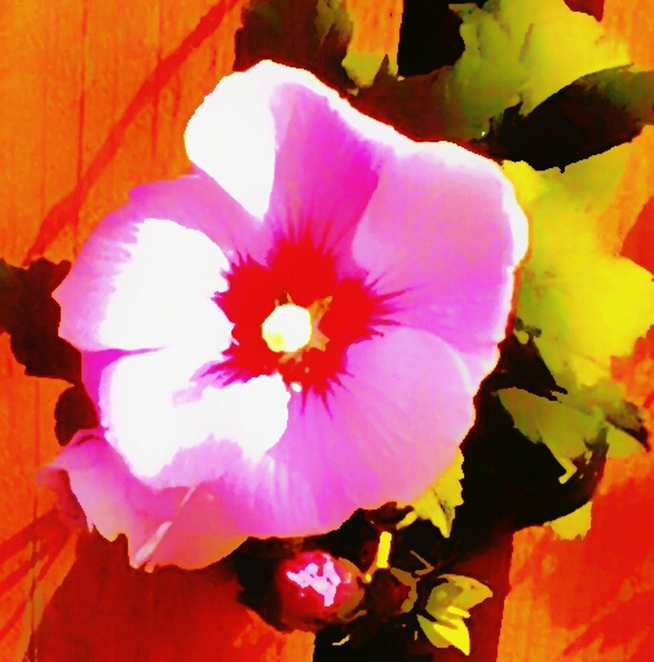 """AMPt - """"Still Life"""" (Nature Morte) .. Rose Of Sharon . Fortheloveofediting"""
