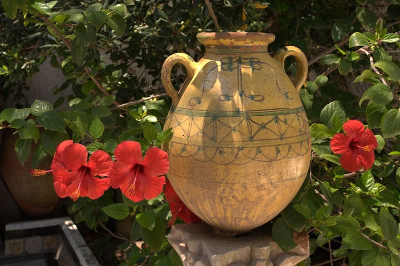 Amphora Antique Antique Ceramic Antiques Close-up Day Flower Green Green Color Hibiscus Hibiscus Close-up Hibiscus Flower Hibiscus Red HibiscusFlowers Leaves Light And Shadow Lightandshadow Nature No People Outdoors Art Is Everywhere Been There.