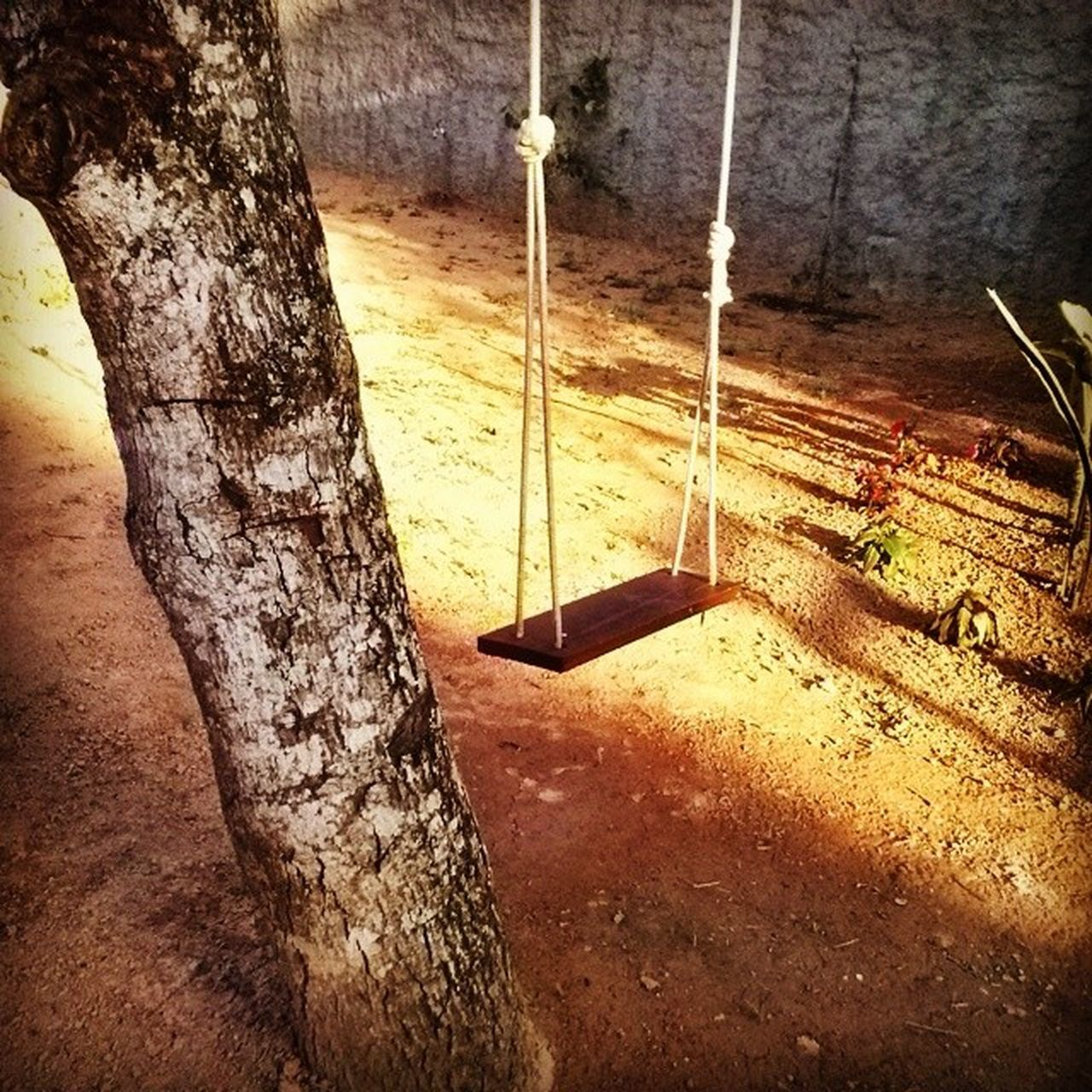 no people, tree trunk, wood - material, day, swing, outdoors, rope swing, close-up