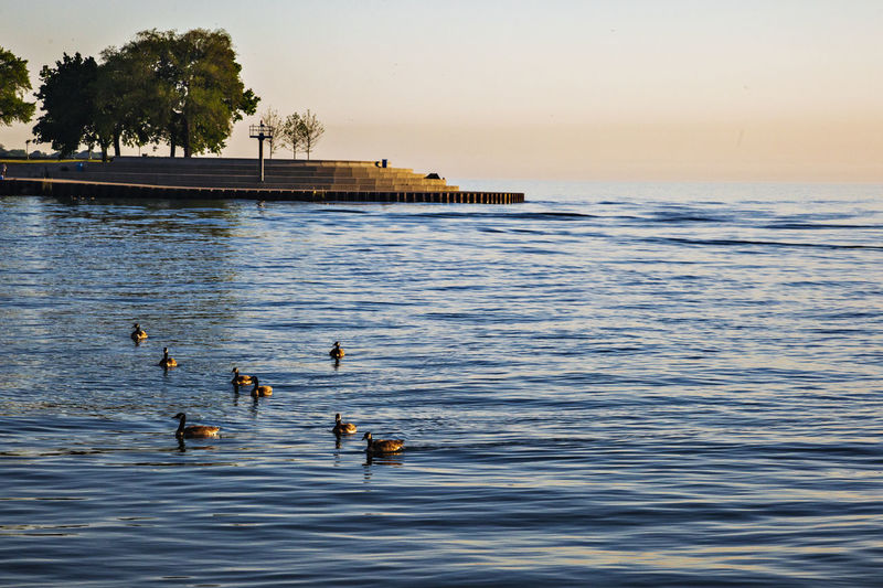 Calm Lake Michigan Calm Dam Full Frame Lake Michigan Lakeside North American Goose Outdoors The Early Morning Water