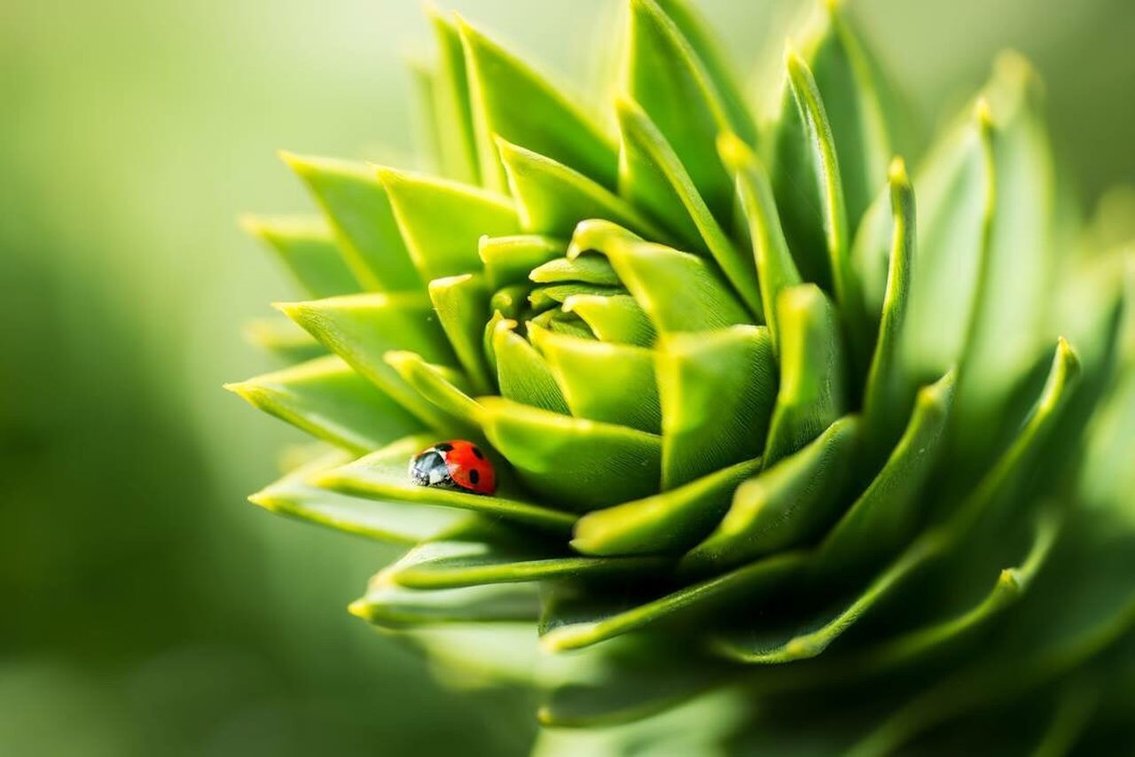 The harder the struggle the more glorious the triumph. Green Color Nature Beauty In Nature Ladybug Close-up No People Ladybird Monkeytree Plant Tree Green Red Life Quote Struggle Lonely