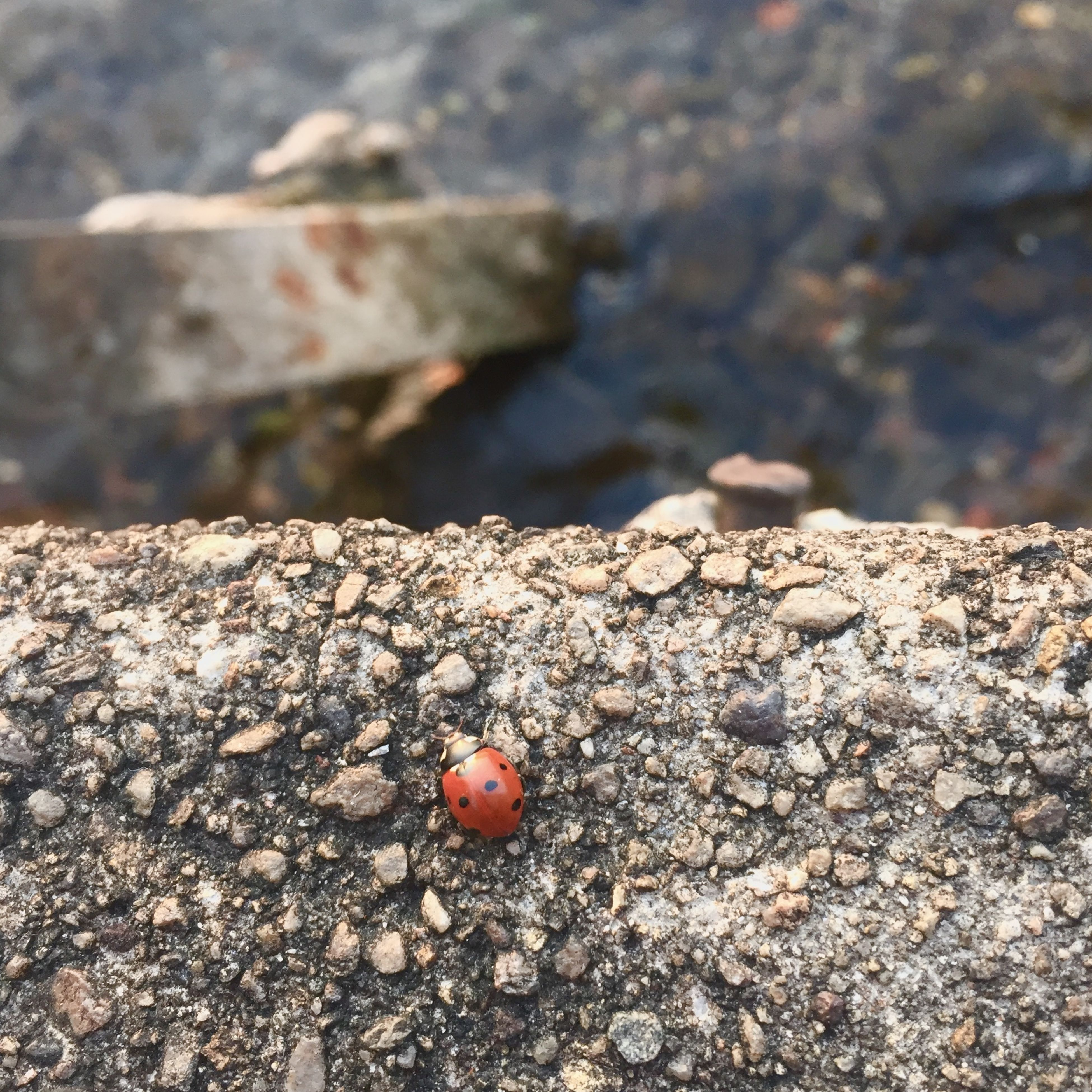 close-up, red, rock - object, focus on foreground, textured, selective focus, stone - object, fruit, nature, food and drink, outdoors, day, no people, high angle view, food, sunlight, ground, healthy eating, rough, wood - material
