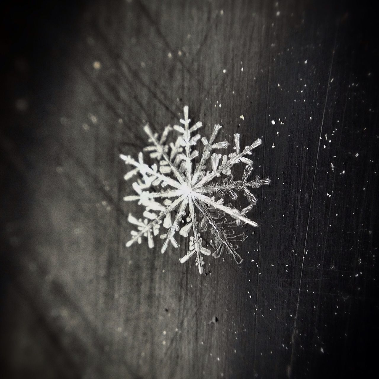 Beautiful stock photos of snowflake, Beauty In Nature, Canada, Close-Up, Cold Temperature