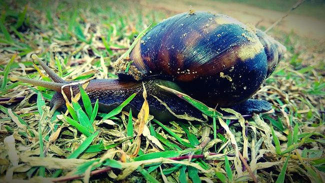 Snail Shells Shell Animals In The Wild Snailhouse Grassland Outdoors Phorography  Animal Themes