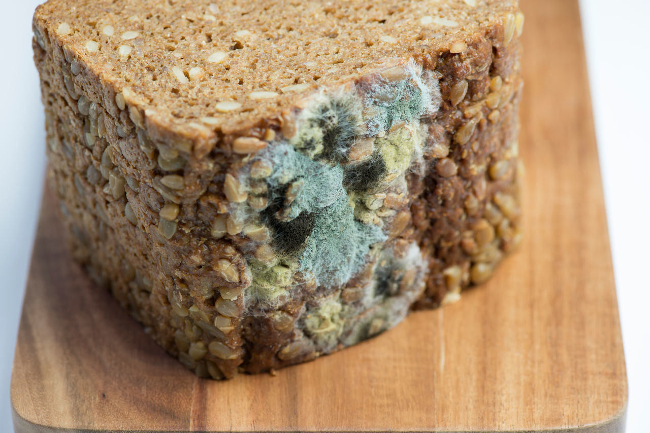Blue Mold on a whole grain bread Baked Goods Bread Cheese Depraved Food Harmful Harmful Healthy Eating Life Macro Meats Mold Moldy Moldy Slice Of Bread Nasty Unfit Unhealthy Eating
