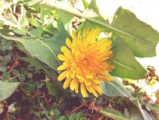 Flower Taking Photos Enjoying Life That's Me Hello World Natural Beauty Natura