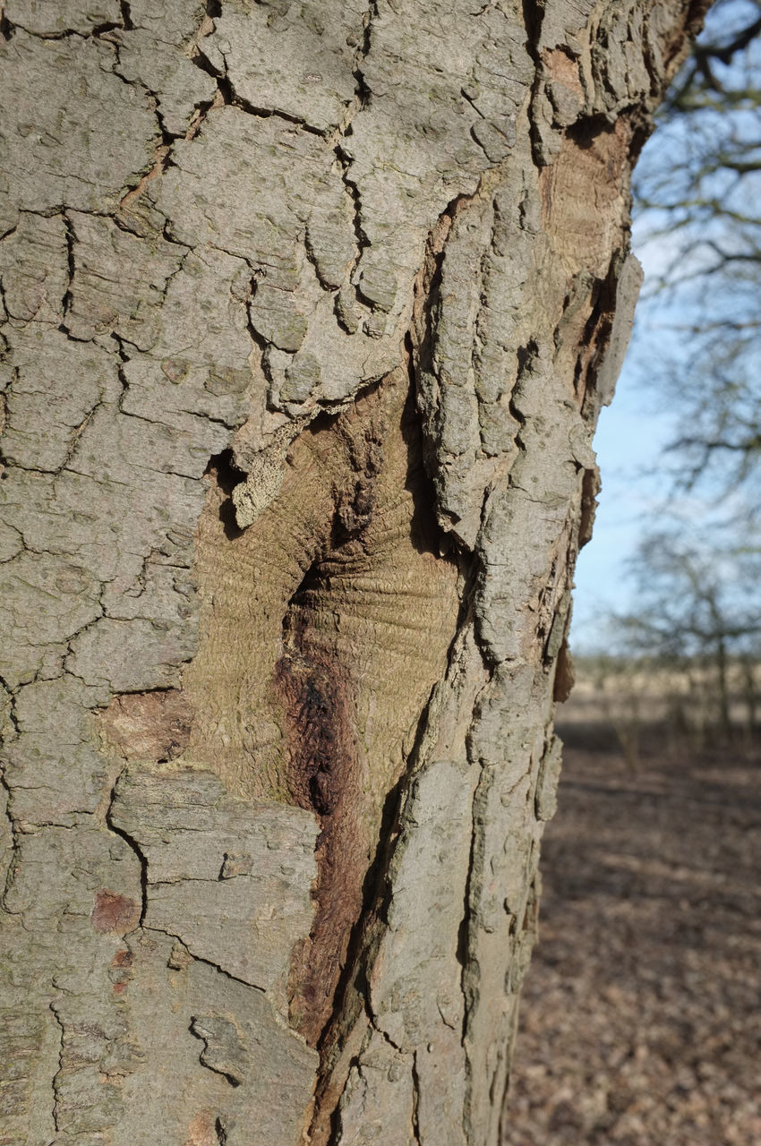 textured, cracked, wood - material, tree trunk, tree, close-up, day, no people, rough, outdoors, nature