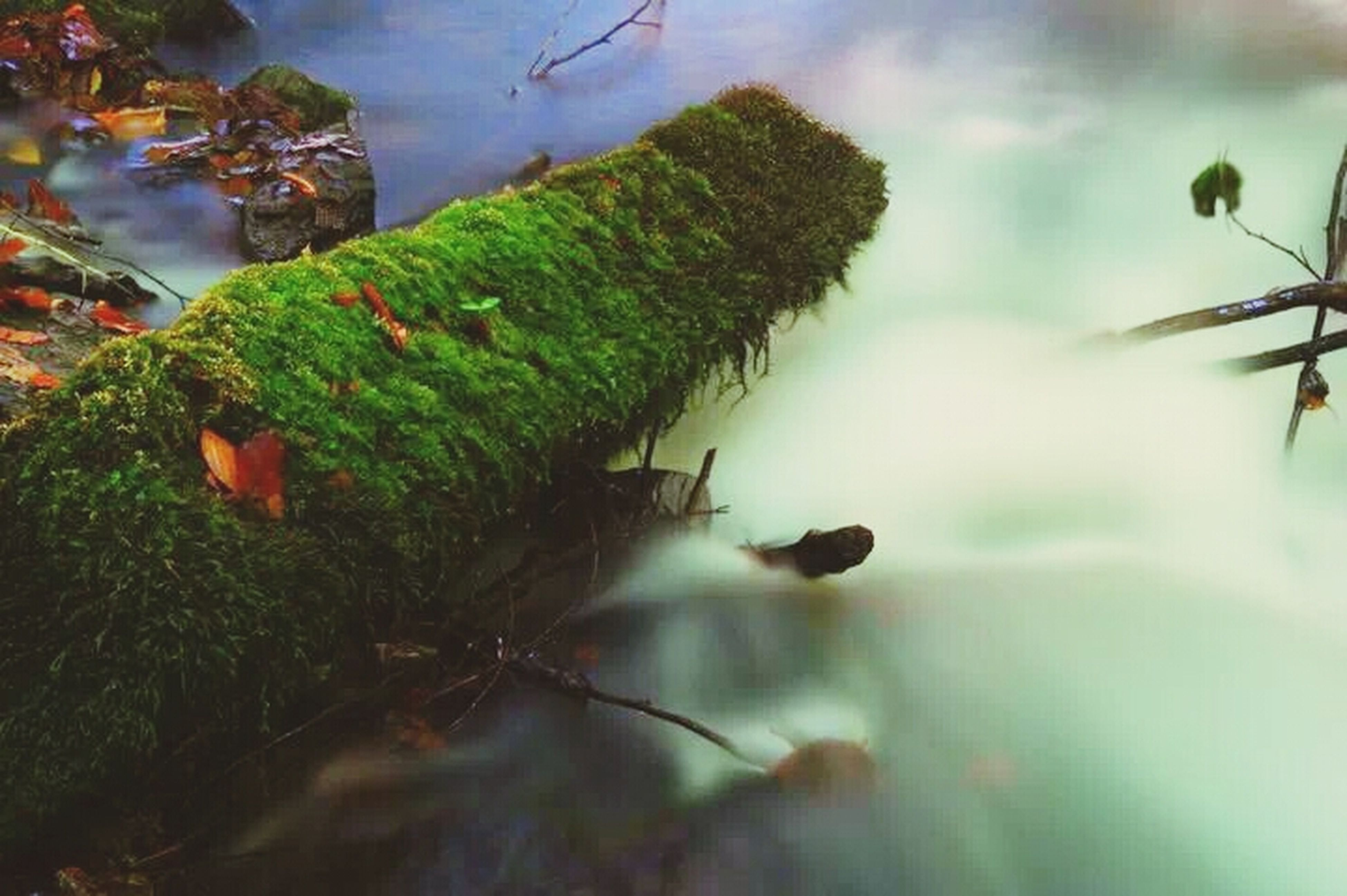 animal themes, animals in the wild, wildlife, one animal, nature, plant, growth, selective focus, green color, water, bird, leaf, tree, tranquility, outdoors, close-up, day, beauty in nature, branch, no people