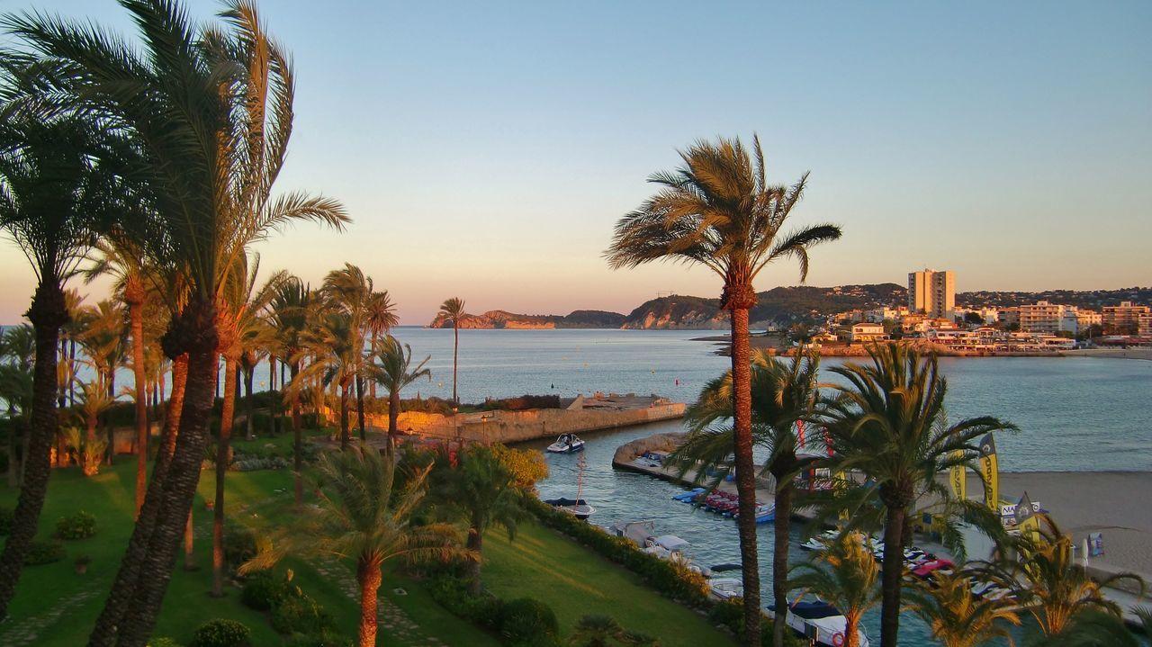 Palm Tree Near Sea Against Clear Sky