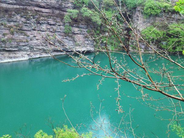 Hugging A Tree Water Nature Lake
