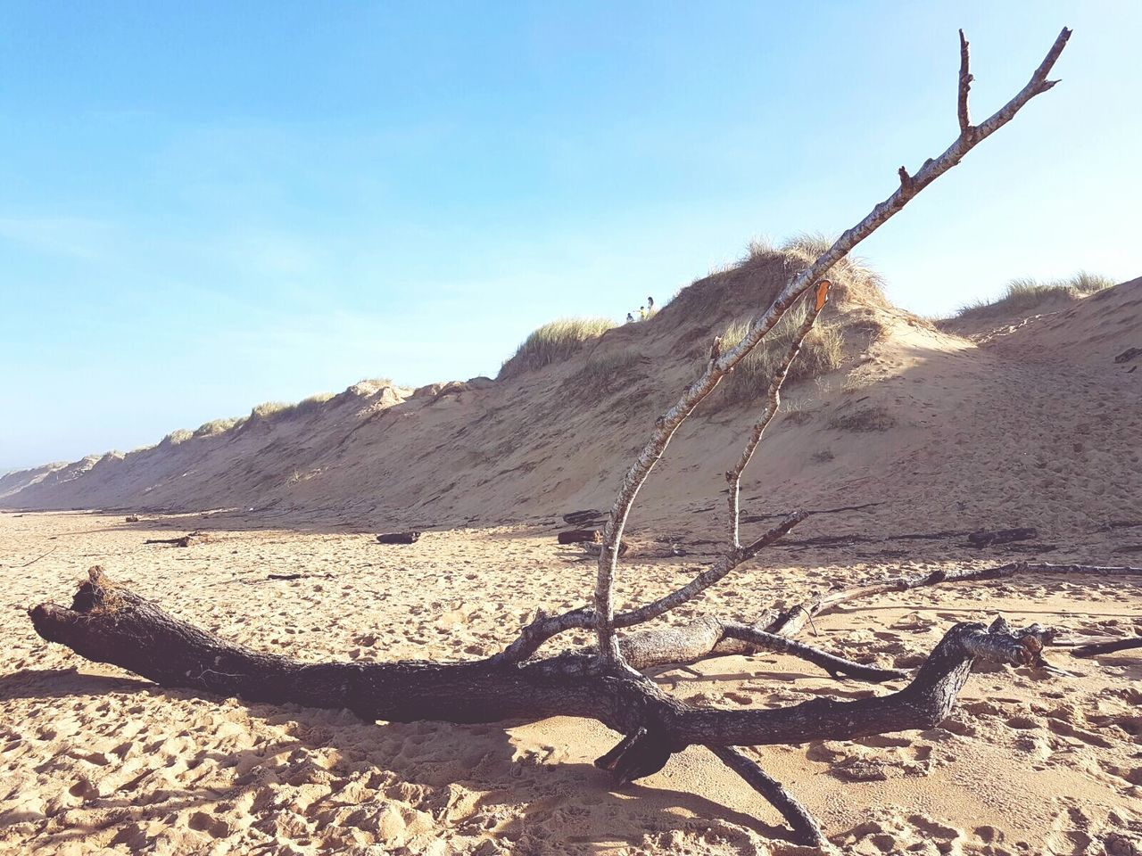 Tronco Fallen Tree Sand Arid Climate Beauty In Nature Dry Land Dunas Deserts Around The World Desierto Arbol Caido Landscape Dramatic Sky Sunny Day