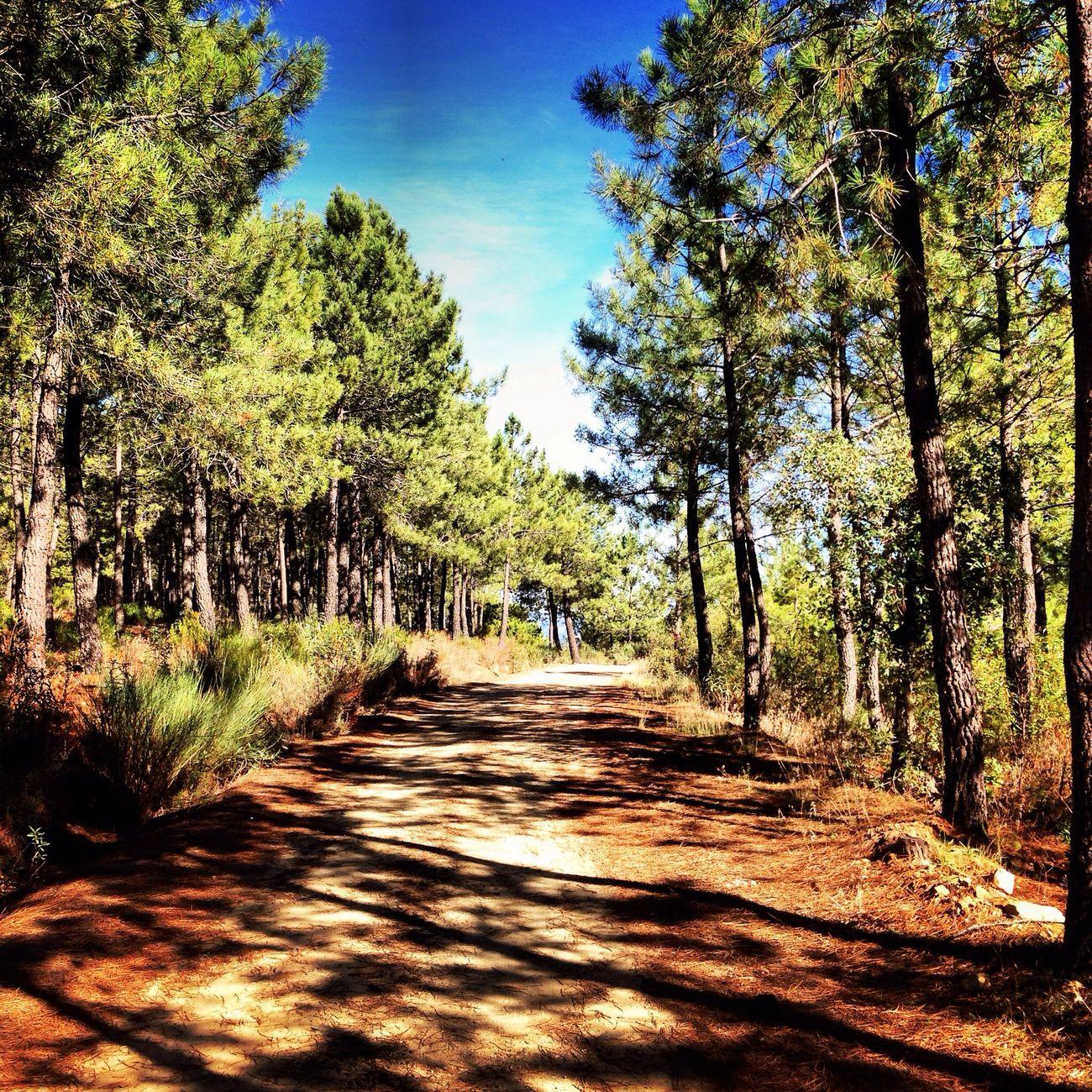 Tierras Garcieñas. Día del Calbote. Extremadura