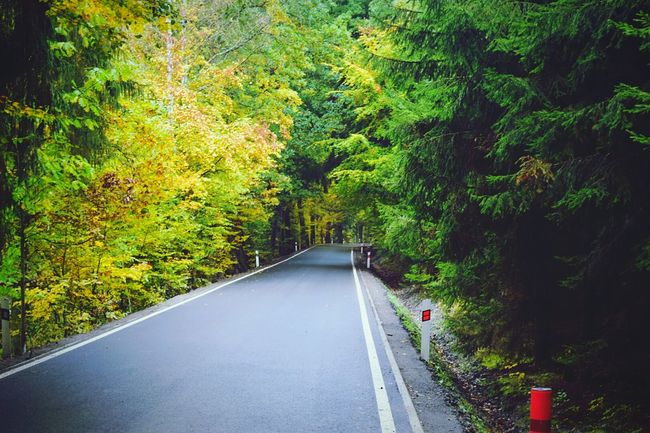 Tschechien Nature Beauty In Nature Forest Outdoors Day No People Tree Road Hobby Landschaft Hobbyphotography Nikon D3200 Urlaub