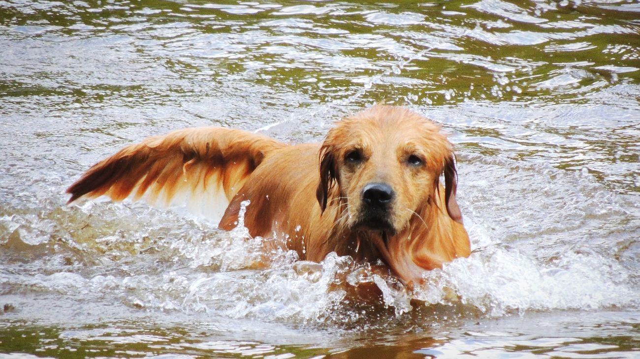 Dog Perro Water Agua