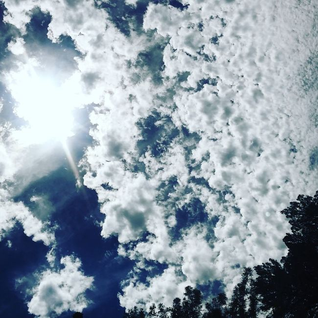 Afternoon Sun Sky And Clouds Calisky Smartphonephotography Norcal Norcal Cali Life Uc Santa Cruz Check This Out Daydreaming EyeEm Nature Lover Mid Day Sun And Clouds Smartphone Photography