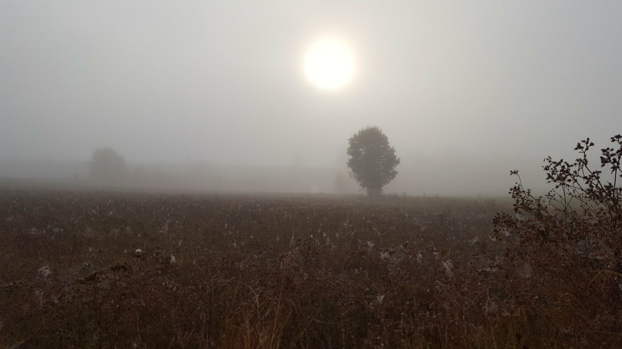 Nature Beauty In Nature Fog Outdoors Horizontal No People Agriculture Sky Night Eye4photography  Landscape_photography Selective Focus Foggy Morning Focus On Foreground Eye4photography  Mobilephotography From My Point Of View Cloud - Sky Beauty In Nature Silhouette New Talent Landscape Tranquility