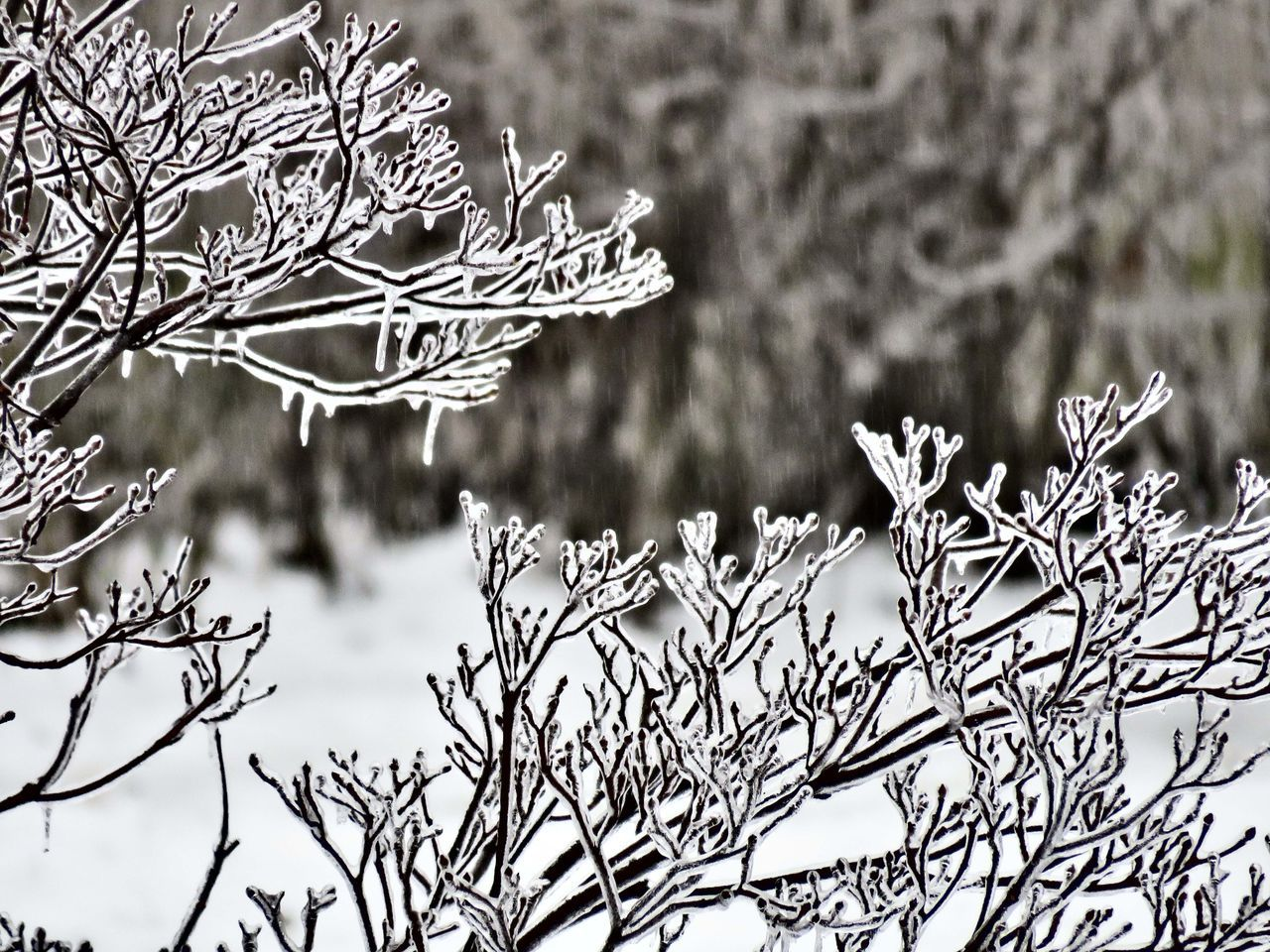 winter, snow, cold temperature, weather, frozen, focus on foreground, nature, snowflake, no people, ice, day, close-up, white color, frost, outdoors, tree, ice crystal, plant, beauty in nature, branch