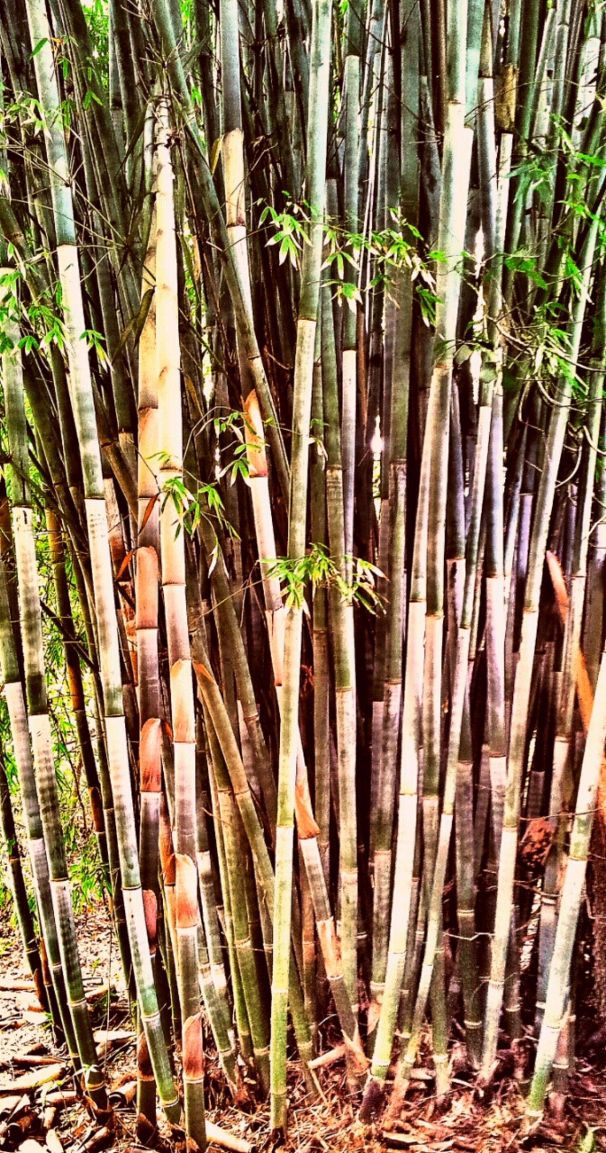 growth, tree trunk, tree, plant, wood - material, full frame, backgrounds, nature, forest, day, abundance, no people, fence, outdoors, leaf, green color, wooden, tranquility, bamboo, wood