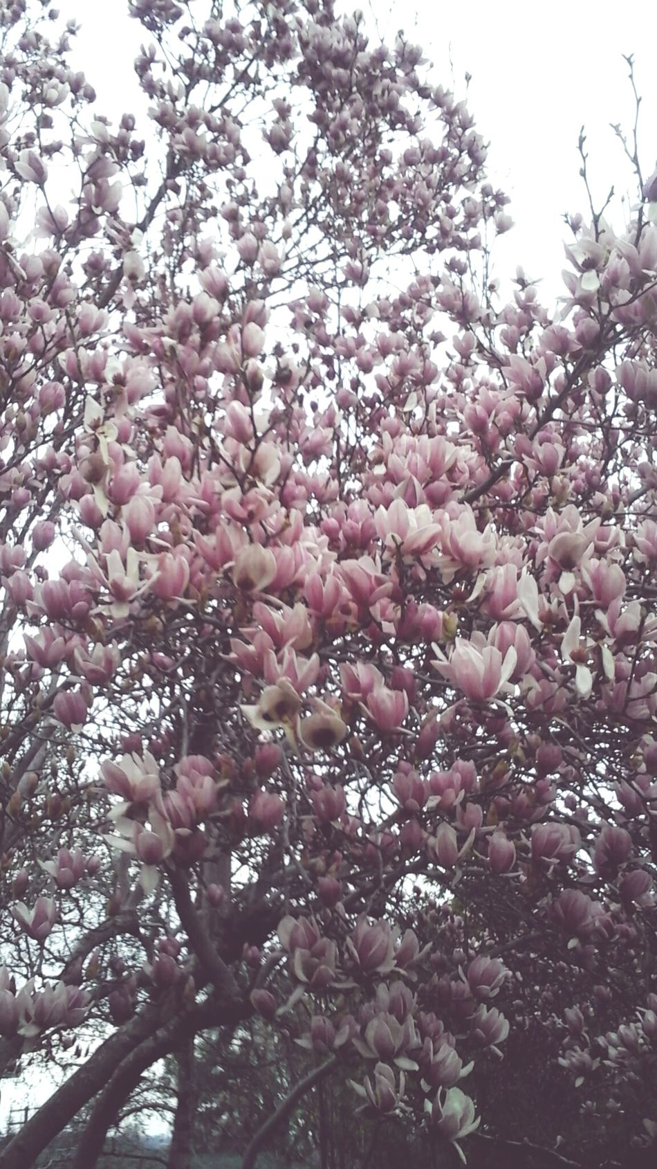 Tree Blossom Pretty