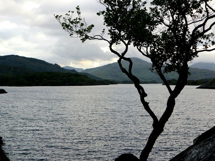 Evening by the lake Mountain Landscape Tree Scenics Mountain Range Nature Tranquility Outdoors Lake Tranquil Scene Rural Scene No People Beauty In Nature Silhouette Day Water Sky Evening Killarney  Killarney National Park County Kerry Ireland