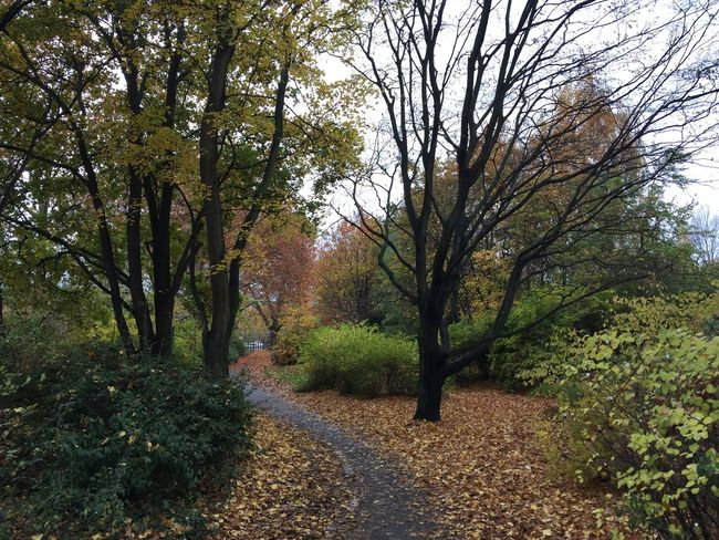 Autumn Beauty In Nature Branch Change Day Diminishing Perspective Dirt Road Footpath Growth Landscape Narrow Nature Non-urban Scene Outdoors Remote Scenics Season  Sky Solitude The Way Forward Tranquil Scene Tranquility Tree Tree Trunk WoodLand
